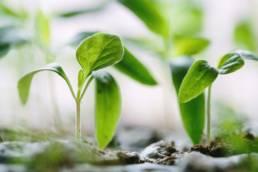corsi online 4sustainability